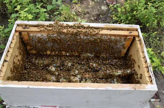buy honey from bee farm beekeeping India | Honeykart