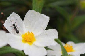 ants eat honey and die