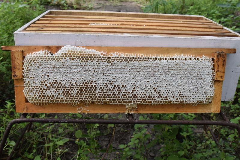 natural raw honey honeyakrt