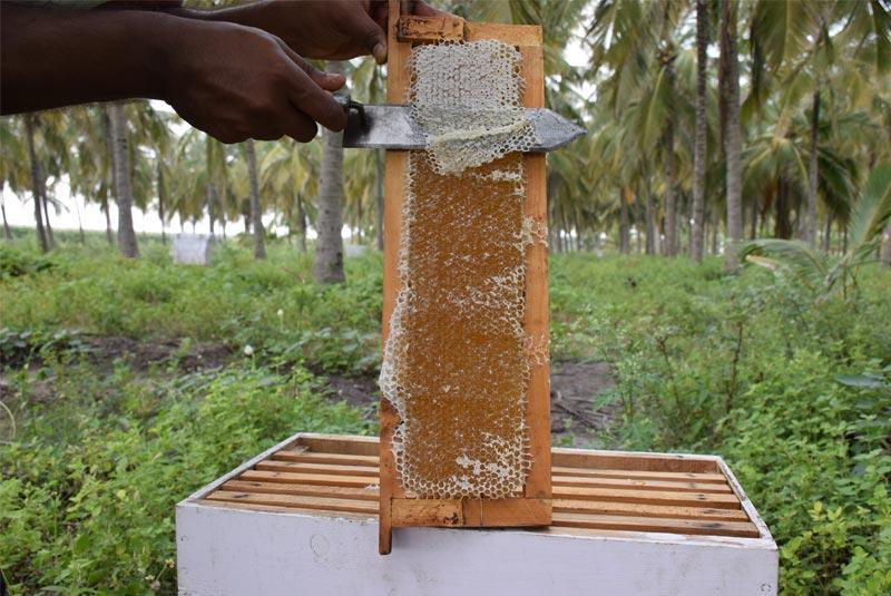 organic honey from honeykart bee farm