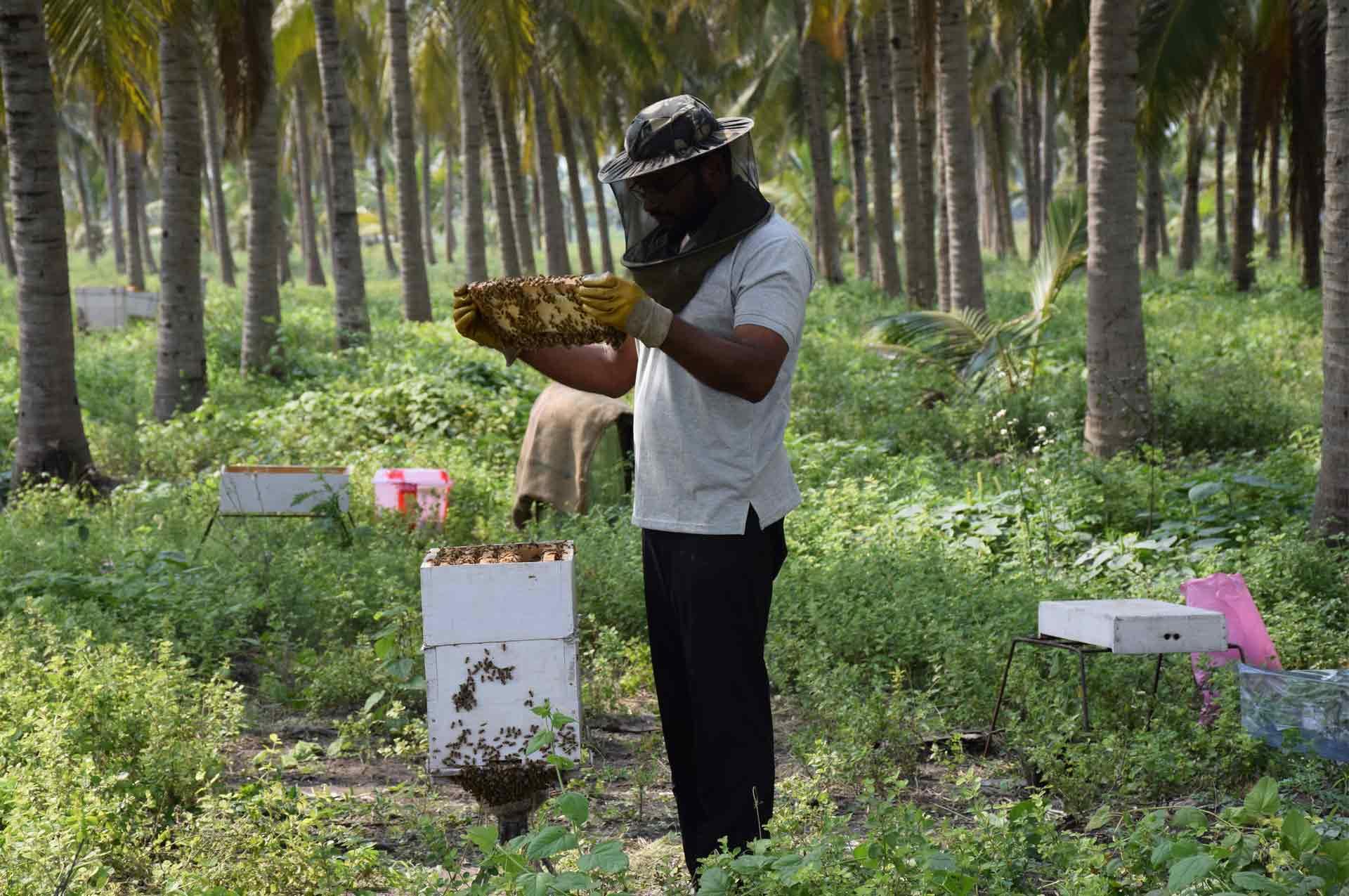 buy_best_pure_raw_organic_honey_brands_online_India