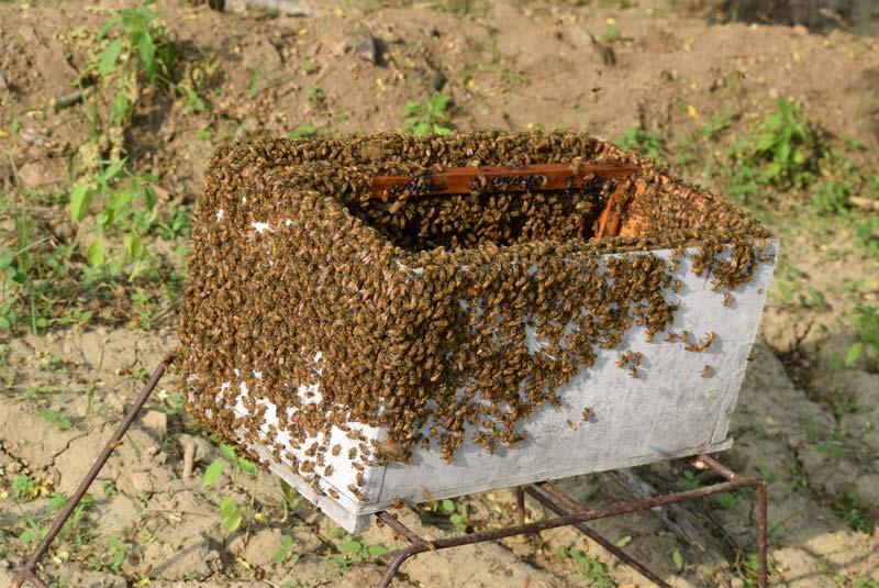 Honey bees in Honeykart