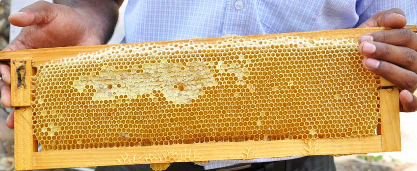 buy honey online